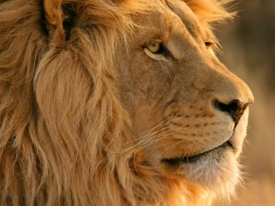 lion-os